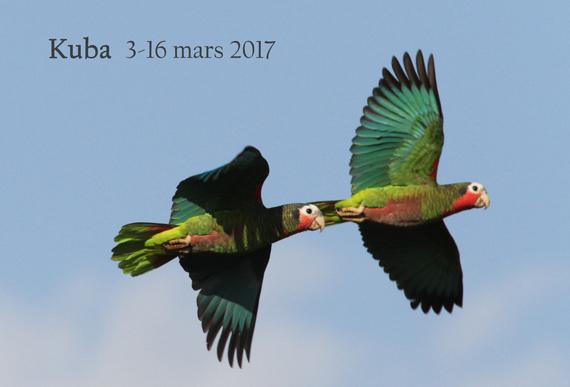 Kuba-2017-rapport