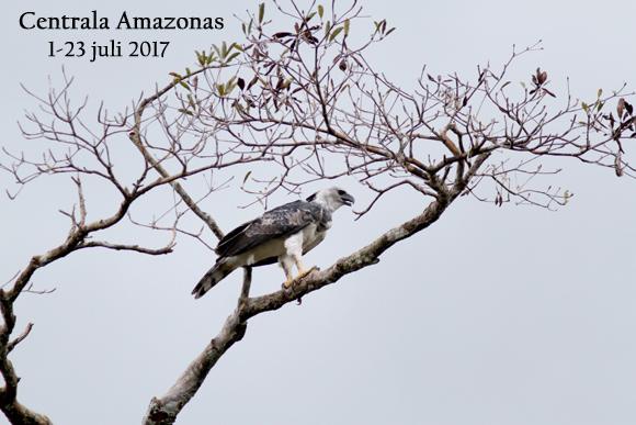 Amazonas-rapport